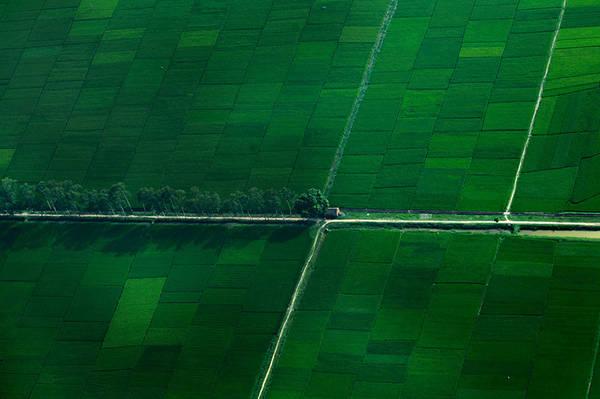 Những cánh đồng lúa xanh ngút tầm mắt của làng quê Bắc Bộ lung linh trong góc máy của hành khách.  Ảnh: seaplanes.vn