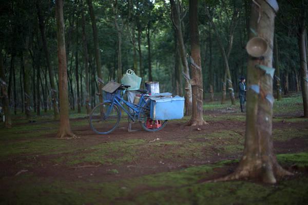 Chiếc xe chở công cụ làm việc của một công nhân dọn vườn cao su - Ảnh: Trân Duy