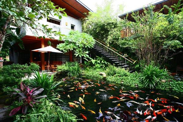 Không gian này dường như càng rộng hơn bởi ngôi nhà - kiến trúc chính của quán hoà lẫn vào cây xanh. Hồ nước là trung tâm của quán với đàn cá nhiều sắc màu tung tăng bơi lội, tô điểm một cách sinh động cho không gian xanh.