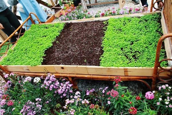 Ngoài ra, An còn có mảnh vườn bên ngoài dành cho thực khách tự tay trồng và tìm hiểu về các loại rau xanh. Nhân viên sẽ tiếp tục chăm sóc cây và cập nhật tình hình phát triển của cây trên trang facebook của quán.