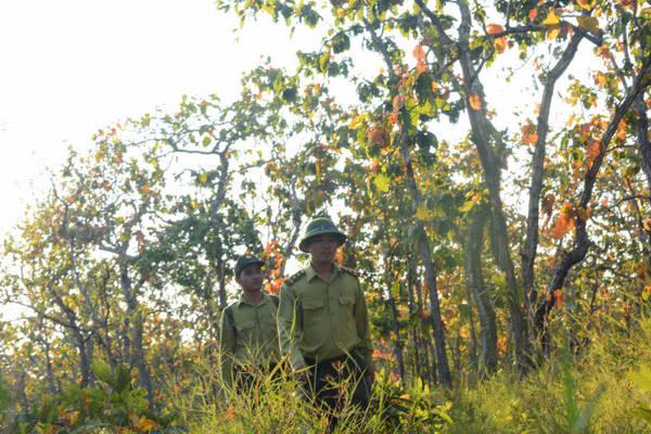 Các cán bộ kiểm lâm đi tuần tra trong rừng khộp mùa thay lá