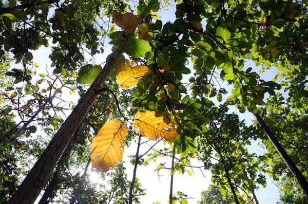 Lá vàng, lá xanh chen lẫn nhau tạo nên bức tranh nhiều màu sắc