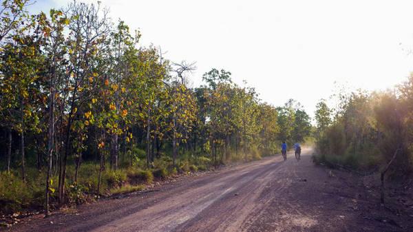 Khách ngoạn cảnh di chuyển trên con đường đất đỏ chạy xuyên qua rừng