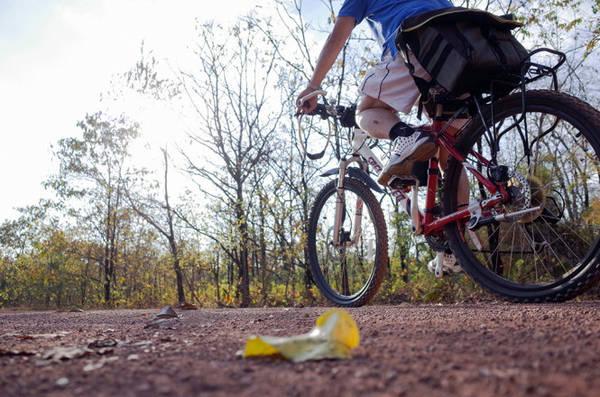 Xe đạp là một lựa chọn thích hợp để tham quan rừng