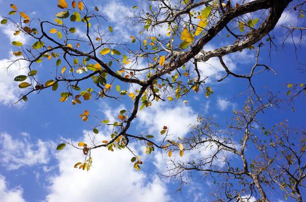 Đến rừng khộp mùa này, bạn sẽ phải mỏi cổ để ngắm những cành cây vươn mình đầy màu sắc trên cao