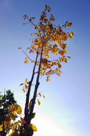 Sắc vàng, sắc đỏ rực rỡ khiến du khách có cảm giác như đang lạc vào khu rừng ở châu Âu