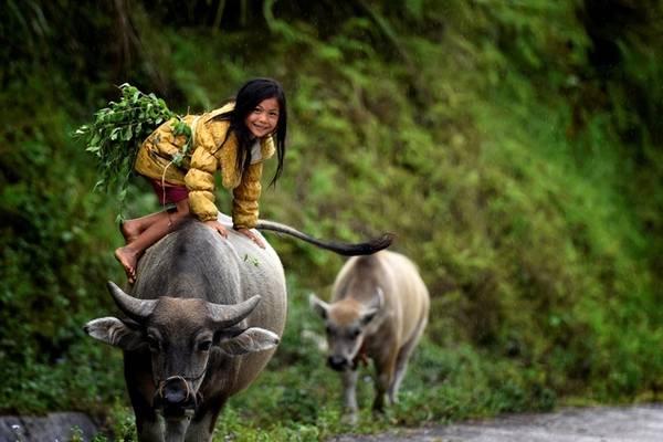 Sau những buổi lao động hăng say người dân lại ngồi nhâm nhi tách trà Shan Tuyết cổ thụ có hàng chục năm tuổi với vị chát ngọt đến đắm say lòng người, giúp họ quên đi những mệt mỏi ưu phiền của cuộc sống. Các bức ảnh của hai tác giả còn khiến người ta cảm thấy như đang ở chốn thiên đường với những dòng sông mây bồng bềnh và huyền diệu được nhìn từ đỉnh Chiêu Lầu Thi. Tác phẩm mang tên Cơn mưa cảm xúc.