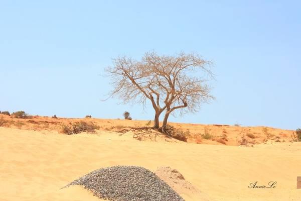 Tuy nhiên, dường như Hòa Thắng chỉ thực sự cuốn hút vào mùa khô, khi vẻ hoang dã và cô đơn phủ khắp cao nguyên hoang vắng.