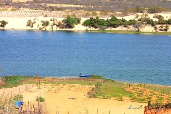 Giữa cảnh khô cằn đó, Bàu Trắng hiện ra như một biểu tượng của sự sống, mang lại nguồn nước ngọt dồi dào cho con người và mùa màng.