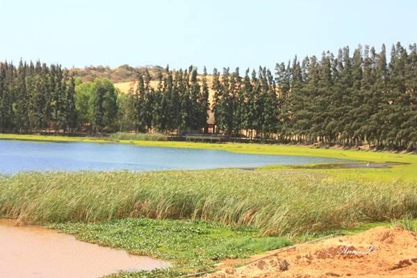 Thanh long, xoài và đậu phộng (lạc) là những loại cây được trồng nhiều ở vùng đất này. Theo truyền thuyết, Bàu Trắng vốn là hồ nước ngọt duy nhất của Hòa Thắng, sau người dân đắp cát băng ngang hồ làm đường đi, chia thành hai hồ nhỏ, gọi là Bàu Ông và Bàu Bà.