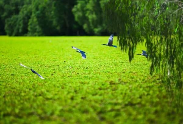 Khung cảnh thanh bình của miền Tây mùa nước nổi. Ảnh : Cuongchan.com