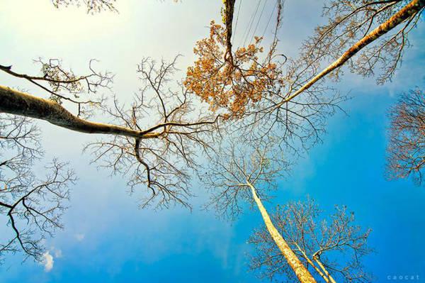 Những cây cổ thụ đang thay lá in hình lên nền trời xanh quanh thác Draysap
