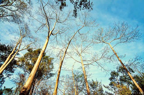 Draysap mùa lá rụng