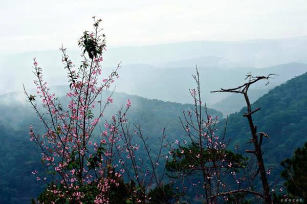 Hoa nở ven đèo Đà Lạt - Ảnh: Cao Cát