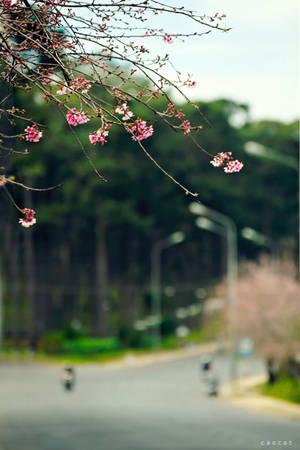 Hoa nở ven đường Đà Lạt - Ảnh: Cao Cát