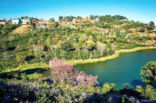 Hoa nở ven đường quanh đường vào hồ Tuyền Lâm - Ảnh: Cao Cát