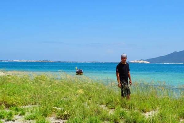 Cánh đồng cỏ lau trên đảo. Ảnh: Phan Lộc