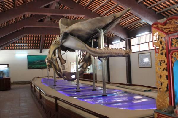 Bộ xương cá voi dài gần 20m tại nhà trưng bày cốt Ông Hải Nam tại Vạn An Thạnh, trên đảo Phú Quý. Ảnh: San San