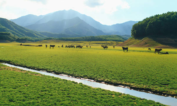 Vào những ngày nước cạn, khu vực ven hồ trở nên rộng lớn, như một thảo nguyên bao la, êm ả. Ảnh: ST