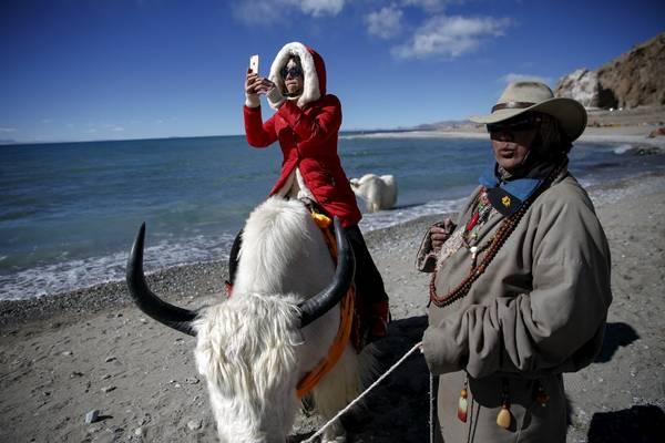 Cưỡi Yak là một hoạt động phổ biến của các khách du lịch khi đến Namtso. Bạn nên thuê Yak vào lúc cuối giờ chiều sẽ rẻ hơn lúc cao điểm là giữa trưa và đầu giờ chiều. Ảnh: Damir Sagolj / Reuters