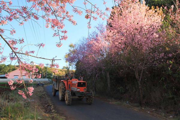 Những con đường nhỏ những ngập tràn sắc hoa của Đà Lạt. Ảnh: Lê Thanh Tuấn