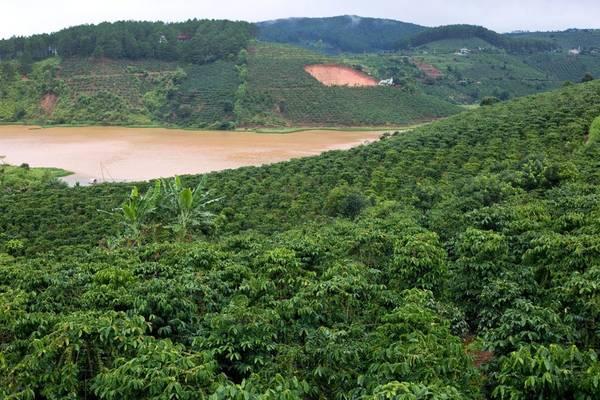 Mê Linh là một đồn điền nhỏ ở vùng nông thôn miền núi gần Đà Lạt. Nơi này rất phát triển loại cà phê Robusta và Moka. Nhưng đặc biệt hơn cả là cà phê chồn nguyên chất. Ảnh: thekitchn