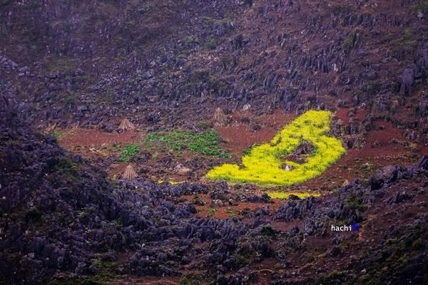 Không đâu trên đất Việt có những khung cảnh đối lập như thế này, miền đất có hoa nở trên đá.