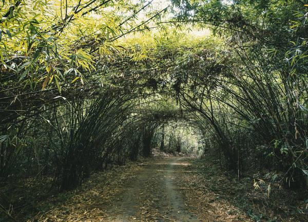 Một con đường xinh đẹp bên trong Nam Cát Tiên. Ảnh:Fujin Liow