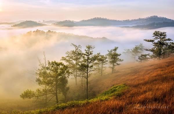 Đồi cỏ hồng chuyển thành màu cỏ cháy, được mệnh danh là thung lũng vàng duy nhất ở Đà Lạt.