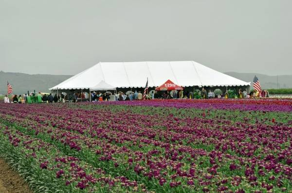 quyeDu khách tham quan cánh đồng hoa ở Lompoc - Ảnh: apassionforflowers