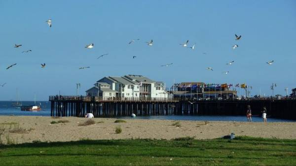 Chim biển rợp trời ở bãi biển Santa Barbara - Ảnh: sunsetbld