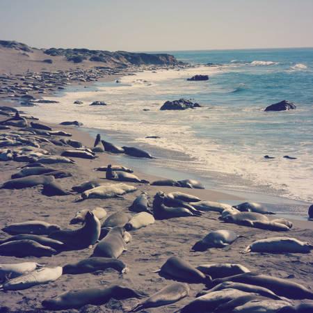 """""""Lãnh địa"""" của voi biển ở Cambria - Ảnh: wp"""