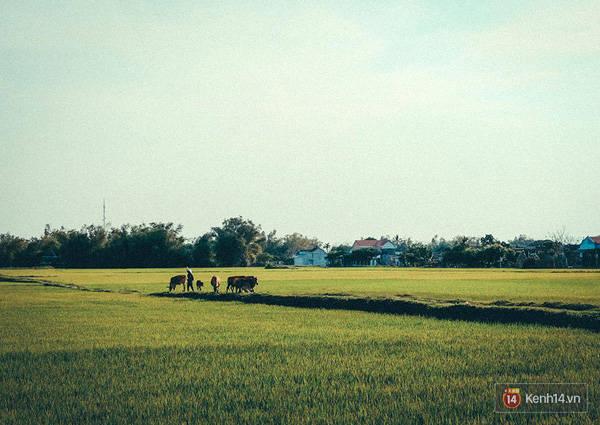 Nét đẹp bình yên, nhẹ nhàng của những cánh đồng