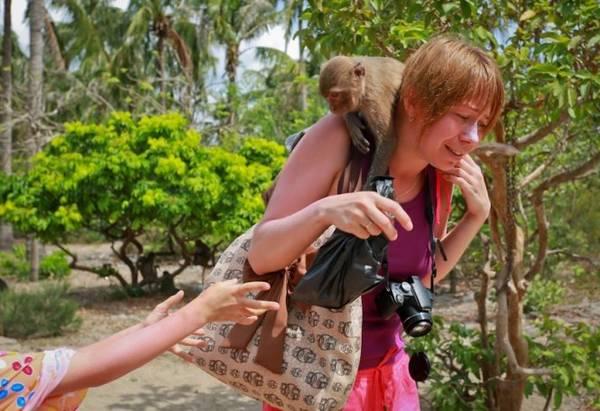 Mỗi khi có khách du lịch tham quan đảo, những chú khỉ thường trêu chọc du khách - Ảnh: Tiến Thành