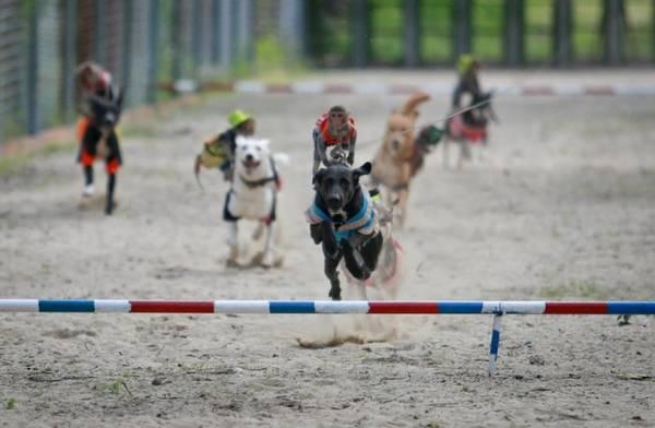 """Những """"kỵ sĩ"""" khỉ trên lưng những chú chó cùng nhau đua tốc độ - Ảnh: Tiến Thành"""