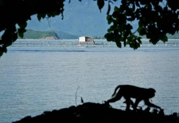 Đảo khỉ Hòn Lao cách TP.Nha Trang khoảng 18km, nằm giữa đầm Nha Phu mênh mông sóng biếc - Ảnh: Tiến Thành
