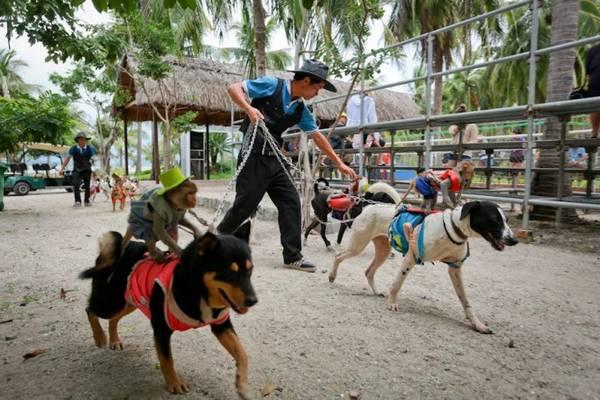 """Anh Nguyễn Văn Mận (ảnh), cho biết việc huấn luyện màn trình diễn những """"kỵ sĩ"""" khỉ ngồi trên lưng chó phải mất một tháng trời - Ảnh: Tiến Thành"""