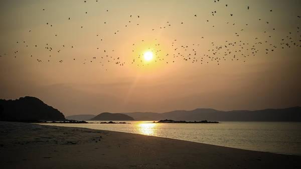 <strong>19. Bãi tắm đảo Cô Tô Con:</strong> Nơi đây không có dân cư sinh sống, lại cách xa đảo trung tâm nên những bãi biển trên đảo Cô Tô con rất hoang sơ. Sau khi ngụp lặn dưới làn nước trong vắt, du khách có thể nhặt những vỏ ốc nhiều màu làm kỷ niệm cho chuyến đi. Trong ảnh là khung cảnh bình minh cực lãng mạn trên đảo Cô Tô con, hàng ngàn con chim bay dưới ánh nắng sớm. Ảnh: Vnexpress