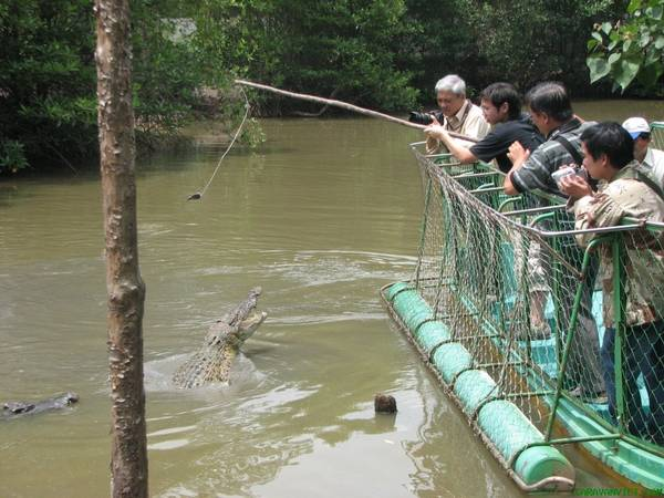 Description: Câu cá sấu. Ảnh: vinaexplorer