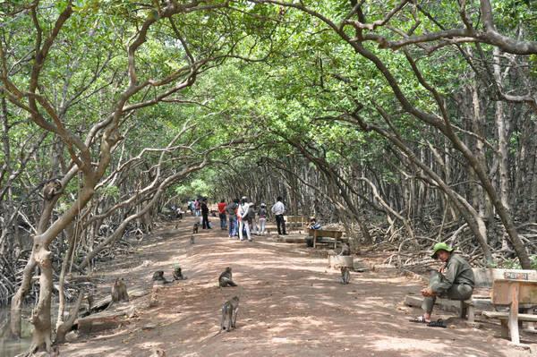 Description: Du khách tham quan đảo Khỉ. Ảnh: mattroiviettravel