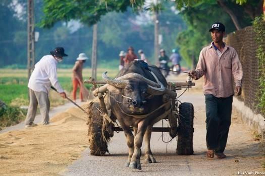 Một ngày mới bắt đầu với những công việc thường nhật của người nông dân.