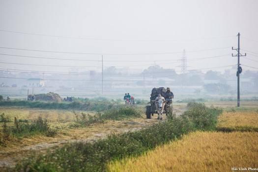 Người nông dân trên đường trở về nhà sau khi thăm đồng sớm.