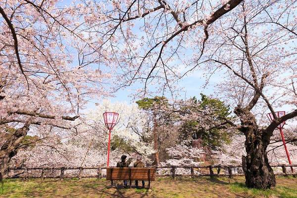Hai cụ già thưởng hoa trong công viên.