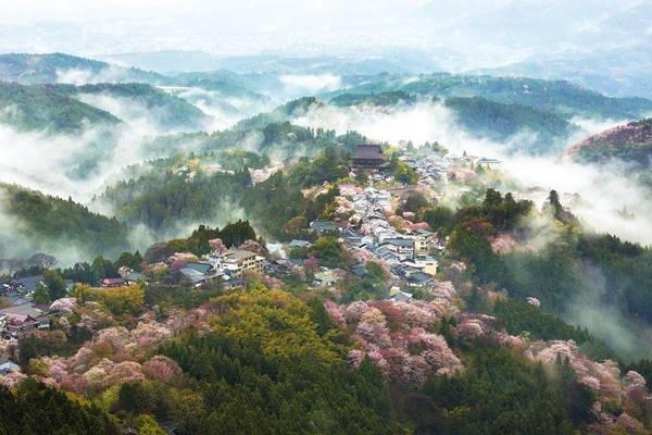 """Gọi mùa hoa anh đào là """"mùa kỳ diệu nhất của Nhật Bản"""", tạp chí National Geographic mới đây đã đăng tải loạt ảnh tuyệt đẹp hoa anh đào xứ Phù Tang."""