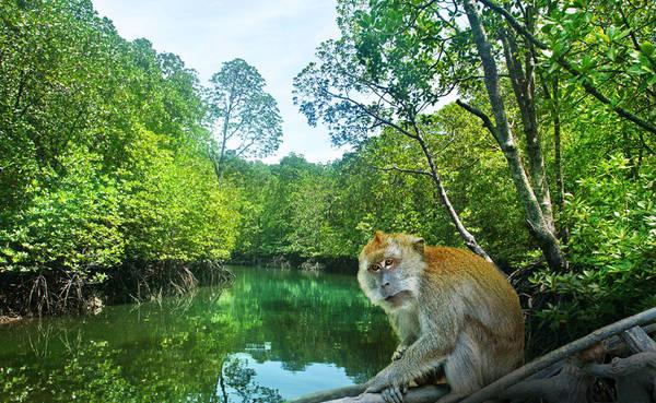 Công viên sinh thái Kilim Karst. Ảnh: Naturallylangkawi.my