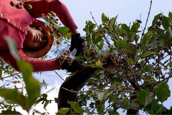Với tình yêu dành cho món cà phê của Việt Nam, Hagerman đã không bỏ lỡ cơ hội tìm hiểu quá trình tạo ra một ly cà phê đậm đà.