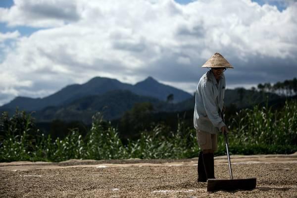 Tùy theo điều kiện thời tiết, quả cà phê được phơi từ 6 đến 30 ngày. Nhiều người cho rằng nắng gió Tây Nguyên là một phần làm nên hương vị thơm ngon độc đáo của cà phê nơi đây.
