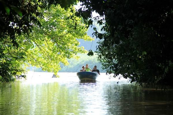 Đi thuyền khám phá sông Kinabatangan.