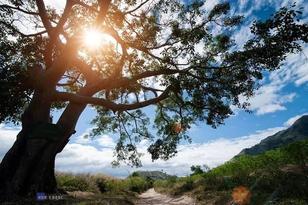 Description: Bao quanh Chư Đăng Ya là những rừng cây cổ thụ, hoang sơ .
