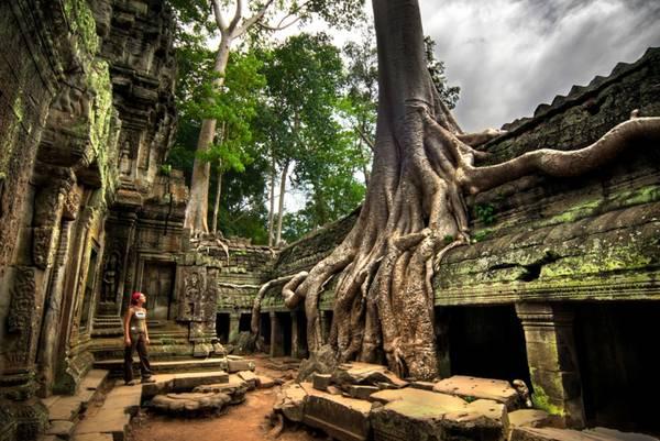 Một góc đền Ta Prohm. Ảnh: Udit Bhatia/flickr
